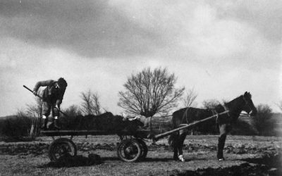 Muck spreading with horse Sam, 1960s
